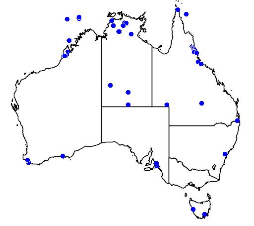 distribution map showing range of Motacilla cinerea in Australia