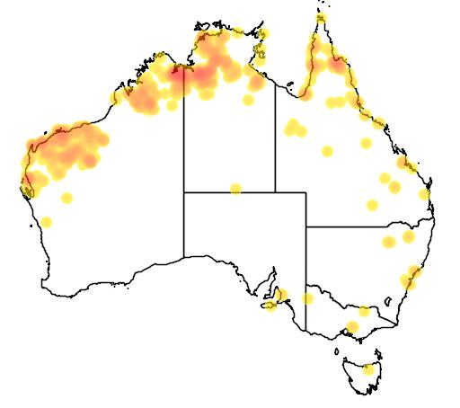 distribution map showing range of Neochmia ruficauda in Australia