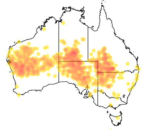 distribution map showing range of Neopsephotus bourkii in Australia