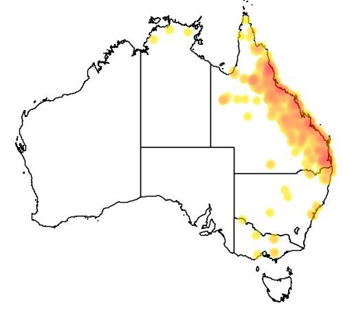 distribution map showing range of Nettapus coromandelianus in Australia