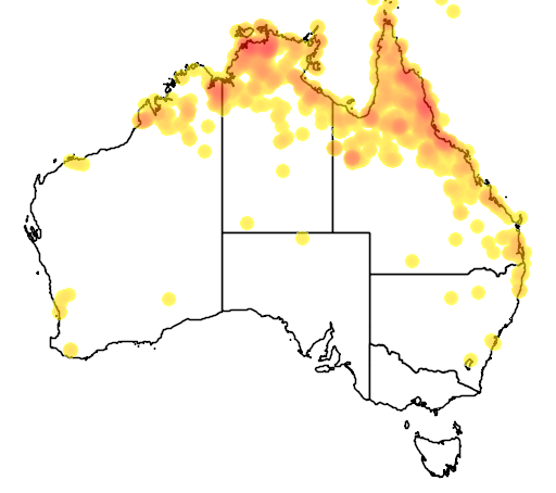 distribution map showing range of Nettapus pulchellus in Australia