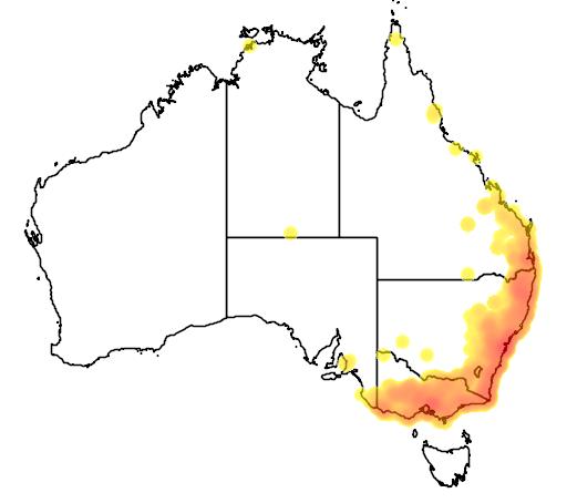 distribution map showing range of Ninox strenua in Australia