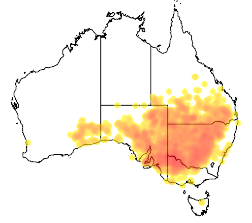 distribution map showing range of Northiella haematogaster in Australia