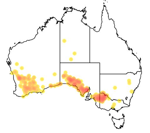 distribution map showing range of Notomys mitchelli in Australia