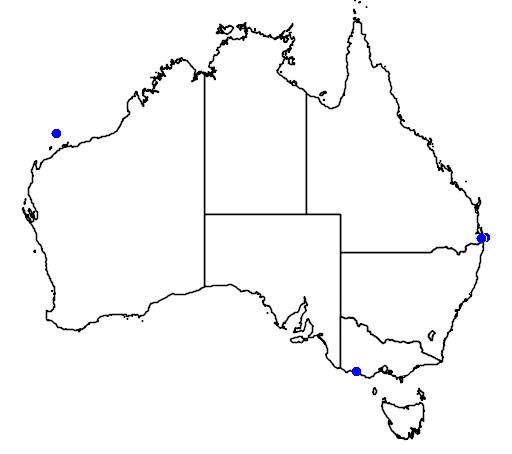 distribution map showing range of Oceanodroma leucorhoa in Australia