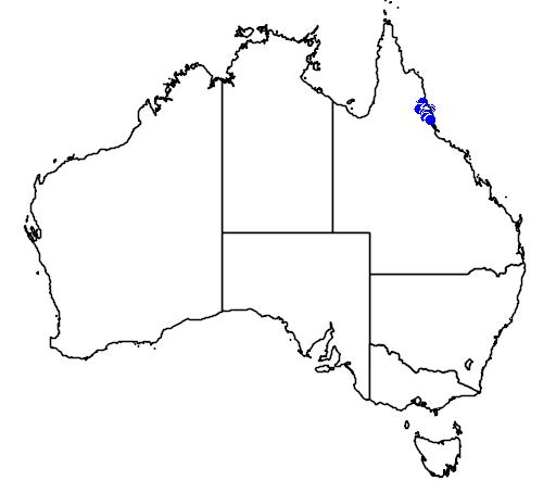 distribution map showing range of Oraniopsis appendiculata in Australia