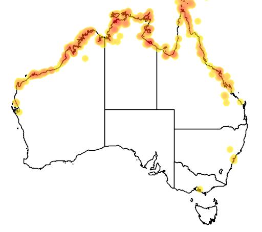 distribution map showing range of Pachycephala melanura in Australia