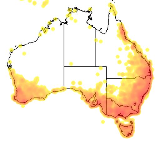 distribution map showing range of Pachycephala pectoralis in Australia
