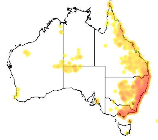 distribution map showing range of Pandorea pandorana in Australia