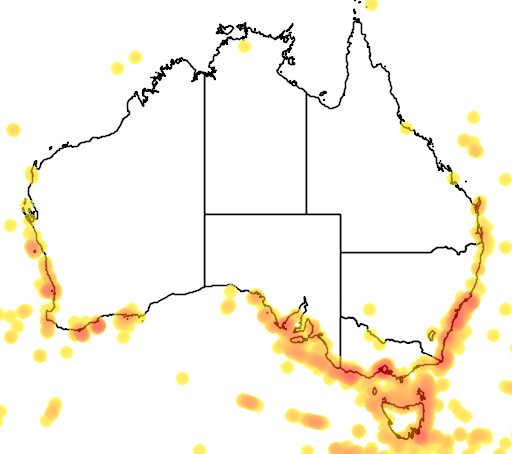 distribution map showing range of Pelagodroma marina in Australia