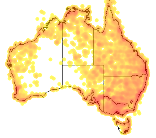 distribution map showing range of Pelecanus conspicillatus in Australia