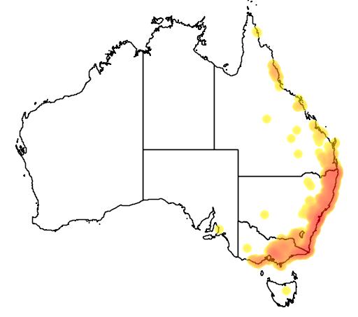 distribution map showing range of Perameles nasuta in Australia