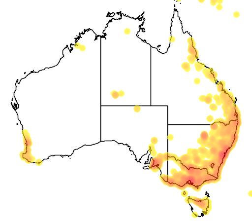 distribution map showing range of Persicaria decipiens in Australia