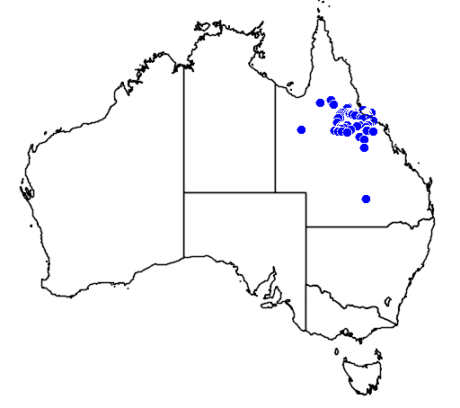 distribution map showing range of Petrogale assimilis in Australia