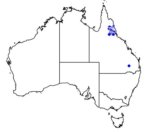 distribution map showing range of Petrogale mareeba in Australia