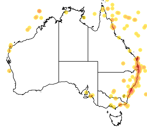 distribution map showing range of Phaethon lepturus in Australia