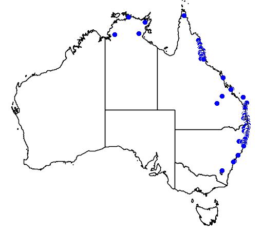 distribution map showing range of Phaius tancarvilleae in Australia