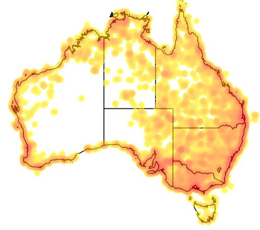 distribution map showing range of Phalacrocorax varius in Australia