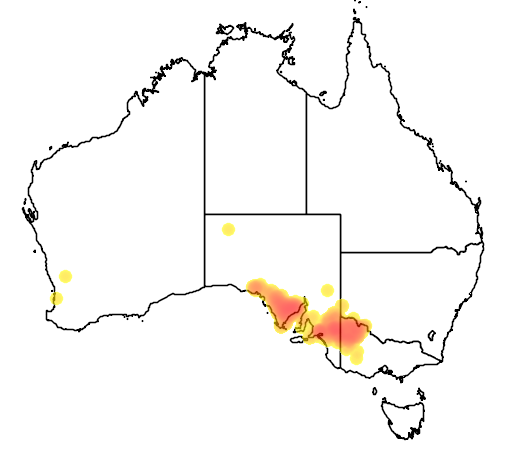 distribution map showing range of Phebalium bullatum in Australia