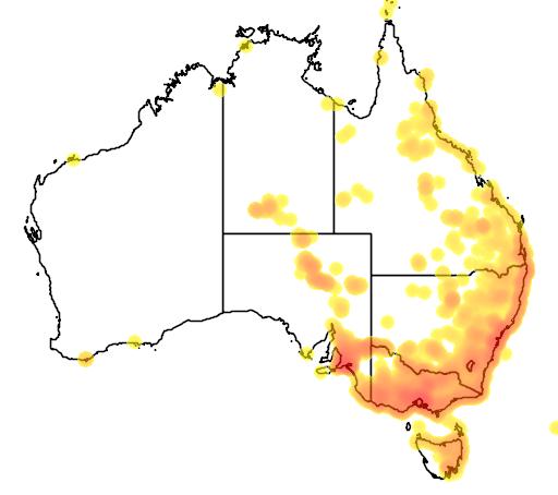 distribution map showing range of Phragmites australis in Australia