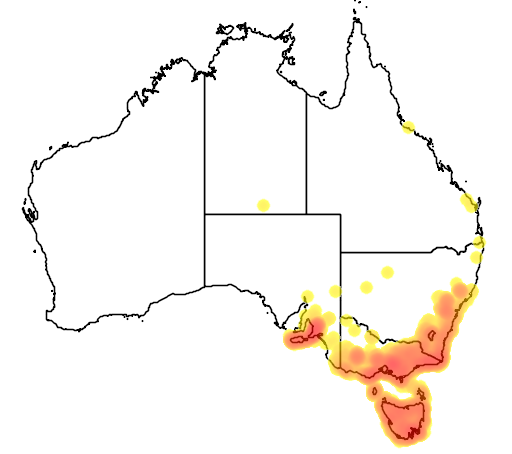 distribution map showing range of Phylidonyris pyrrhoptera in Australia