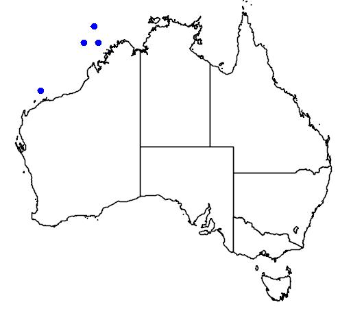 distribution map showing range of Phylloscopus borealis in Australia