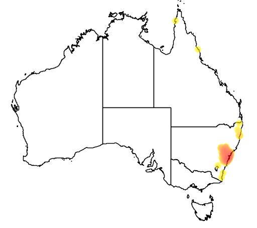 distribution map showing range of Phyllurus platurus in Australia
