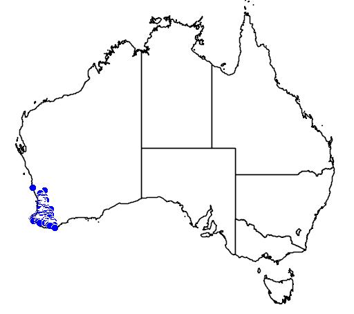 distribution map showing range of Pimelea ciliata in Australia