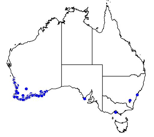 distribution map showing range of Pimelea ferruginea in Australia