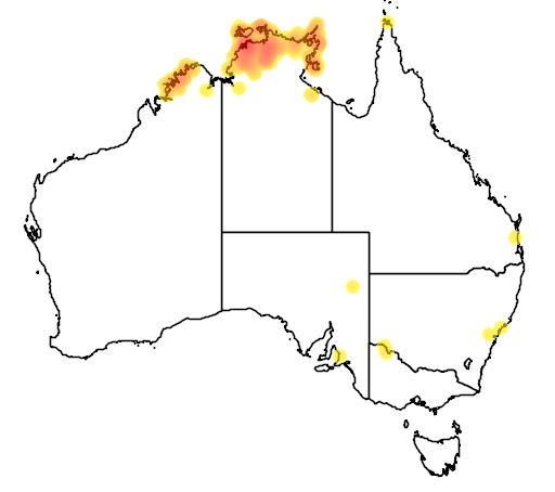distribution map showing range of Pitta iris in Australia