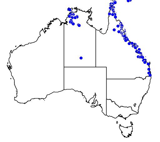 distribution map showing range of Pittosporum ferrugineum in Australia