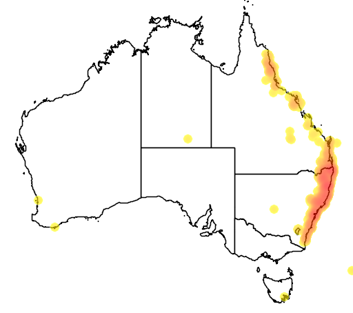 distribution map showing range of Platycerium bifurcatum in Australia