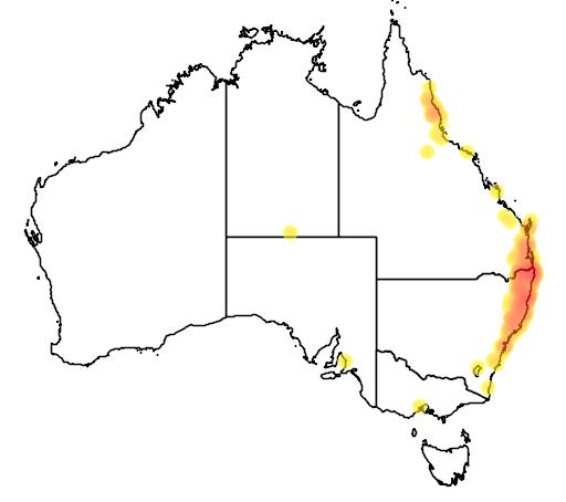distribution map showing range of Platycerium grande in Australia