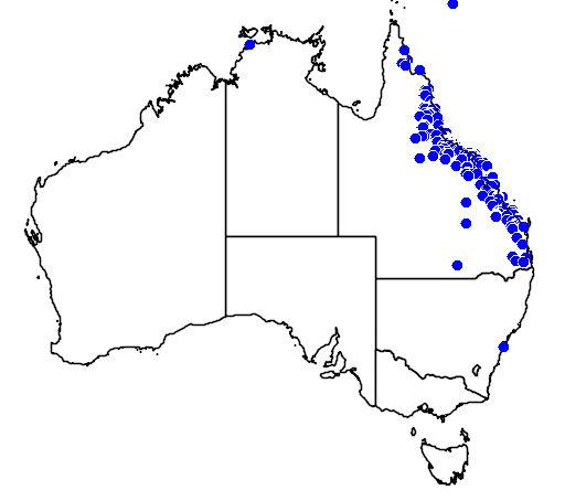 distribution map showing range of Pleiogynium timorense in Australia