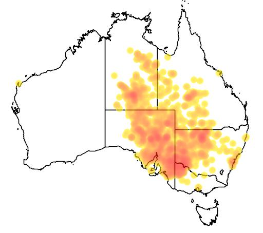 distribution map showing range of Pogona vitticeps in Australia