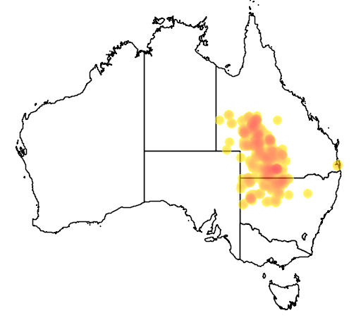distribution map showing range of Pomatostomus halli in Australia