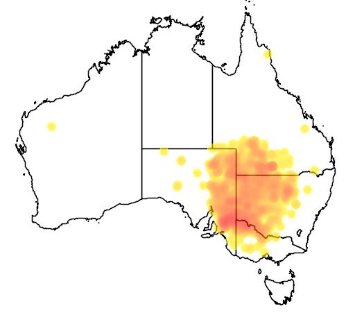 distribution map showing range of Pomatostomus ruficeps in Australia