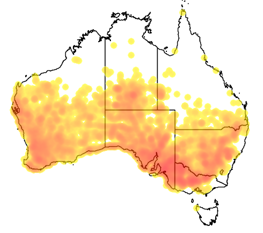 distribution map showing range of Pomatostomus superciliosus in Australia