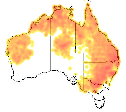 distribution map showing range of Pomatostomus temporalis in Australia