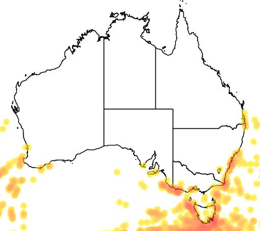 distribution map showing range of Procellaria aequinoctialis in Australia