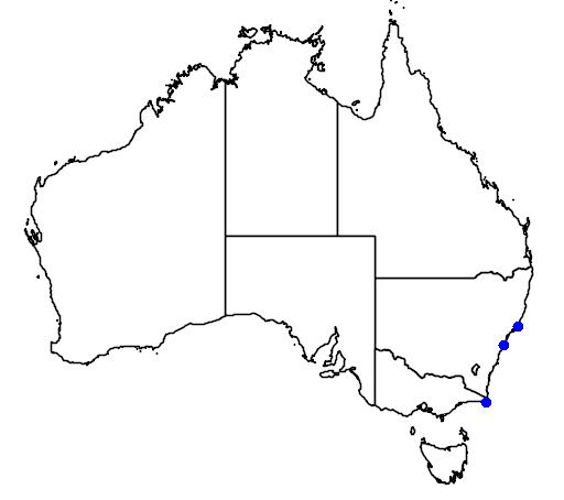 distribution map showing range of Procelsterna albivitta in Australia