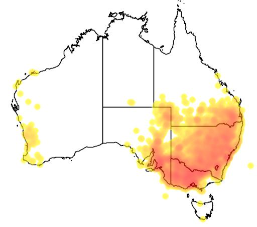distribution map showing range of Psephotus haematonotus in Australia