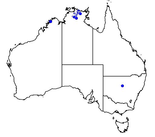 distribution map showing range of Pseudothecadactylus lindneri in Australia