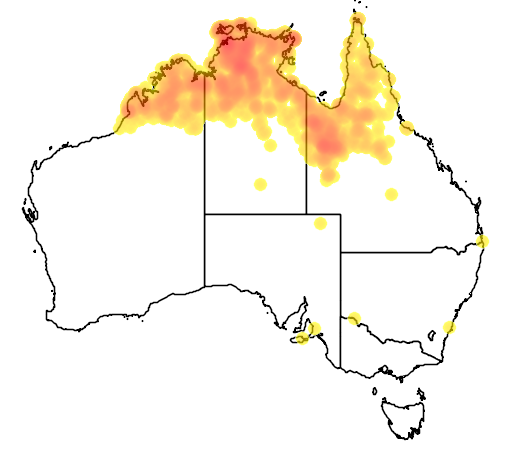 distribution map showing range of Psitteuteles versicolor in Australia