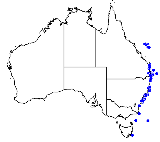 distribution map showing range of Pterodroma cervicalis in Australia