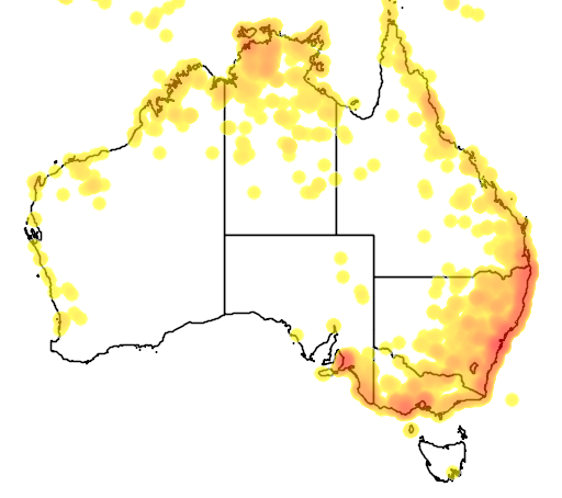 distribution map showing range of Pteropus conspillatus in Australia