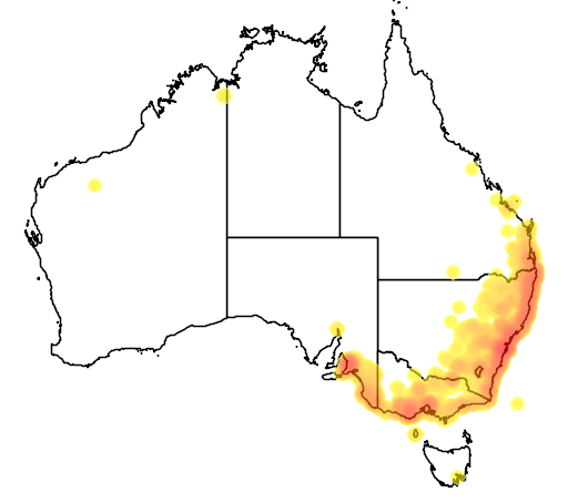 distribution map showing range of Pteropus poliocephalus in Australia