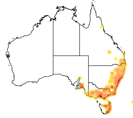 distribution map showing range of Pterostylis curta in Australia