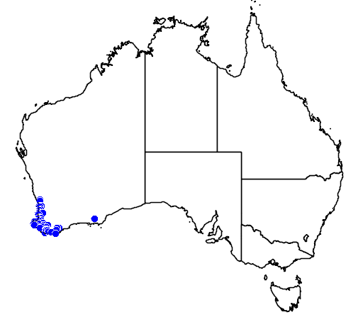 distribution map showing range of Pterostylis pyramidalis in Australia