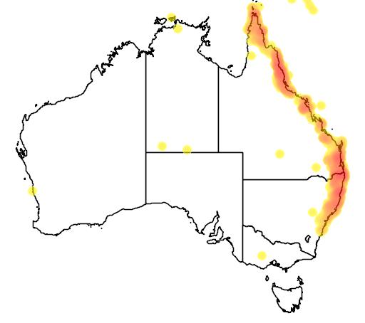 distribution map showing range of Ptilinopus magnificus in Australia